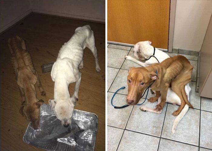 Сотрудники приюта вернули к жизни оголодавших собак (6 фото)