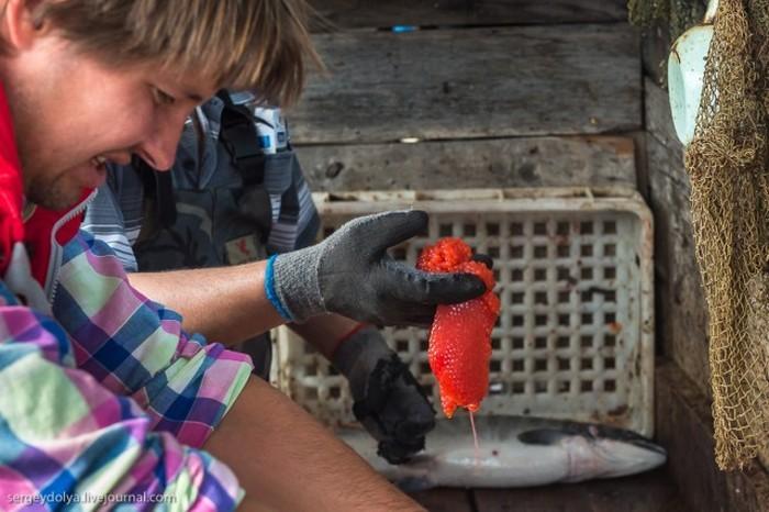 Процесс приготовления красной икры-пятиминутки (20 фото)