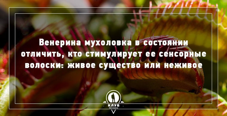 Несколько фактов о плотоядных растениях (9 фото)