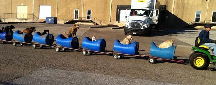 Американец катает собак на самодельном поезде (5 фото)