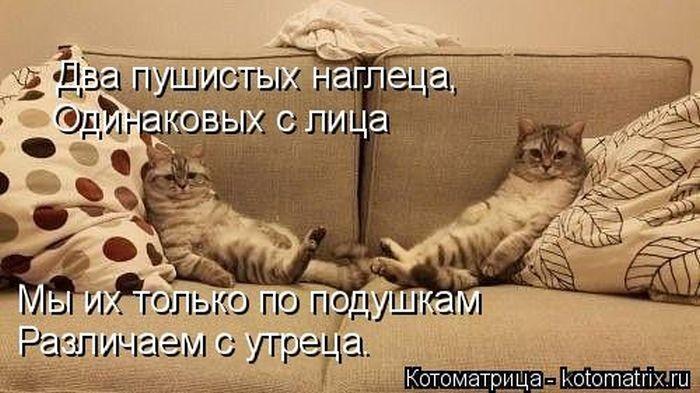 """""""Пушистый"""" юмор (50 фото)"""
