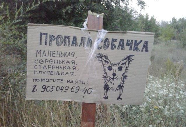 Забавные объявления о пропаже домашних животных (25 фото)