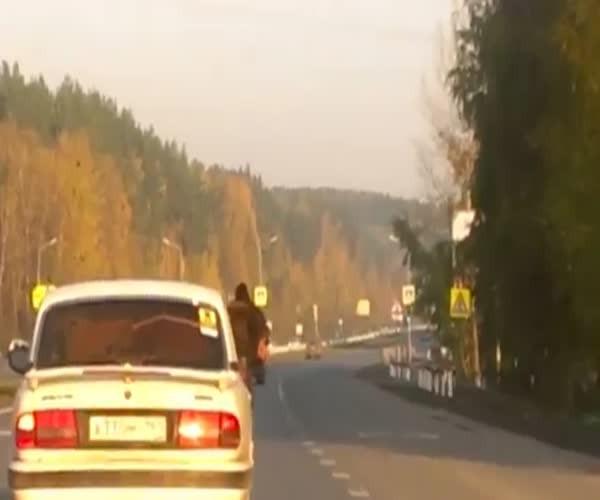 Необычный пассажир в Волге