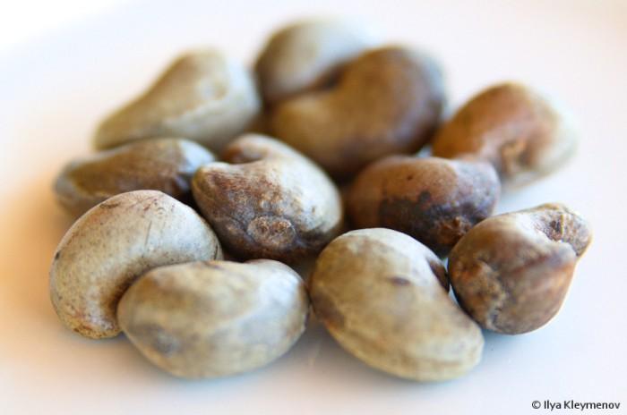 Не стоит пробовать плоды неизвестных расстений (5 фото)