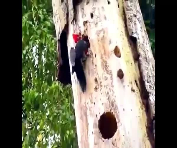 В дупле дерева дятел обнаружил змею