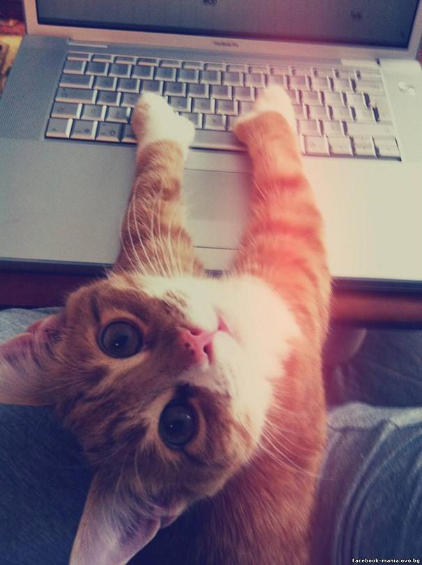 Коты, настойчиво требующие внимания (15 фото)