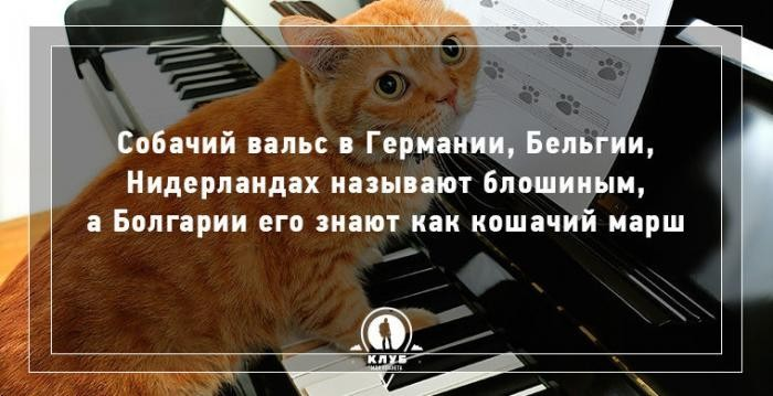 10 фактов о кошках