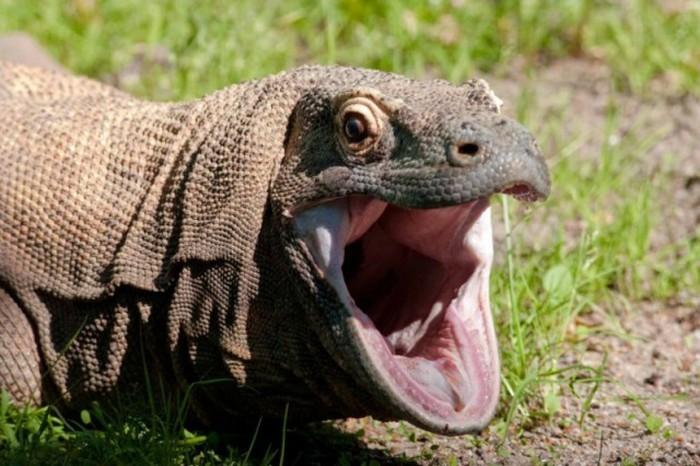 Несколько необычных способов защиты от врагов в животном мире (10 фото)