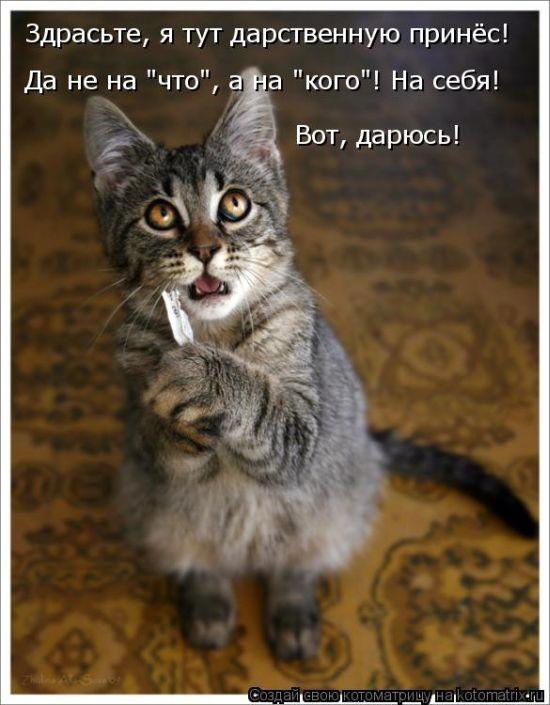 Шутки о братьях наших меньших (50 фото)