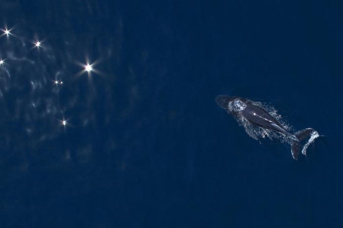Поплаваем с горбатыми китами?
