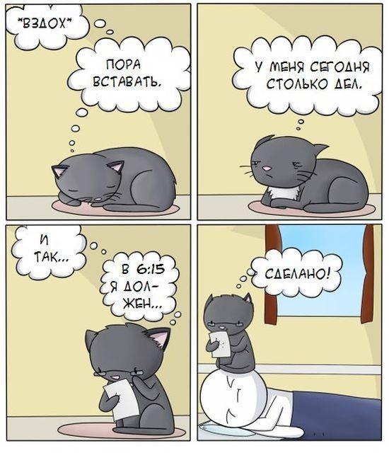 Забавные комиксы о котах (20 картинок)