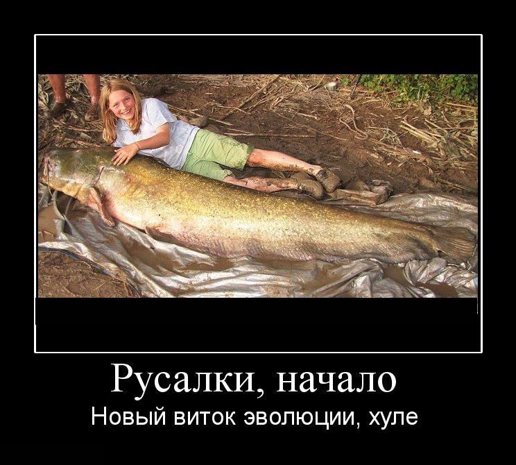 Демотиваторы о русалках (15 фото)