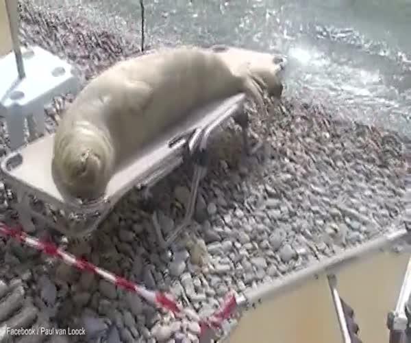 Пляжный отдых морского льва