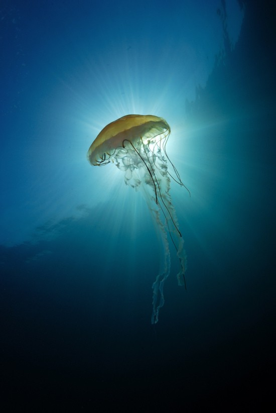 Лучшие фотографии из категории Подводный мир (9 фото)