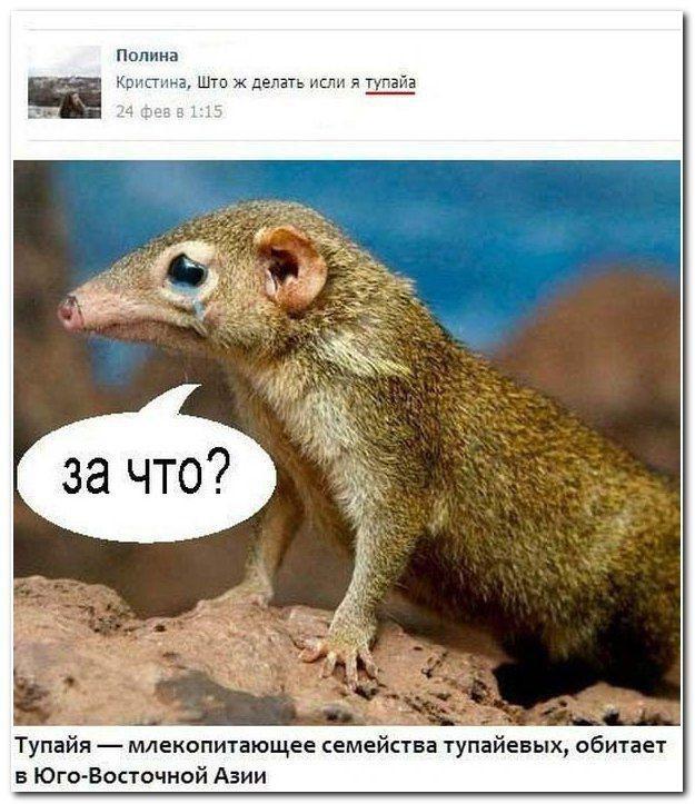 Забавные комментарии из социальных сетей (31 фото)