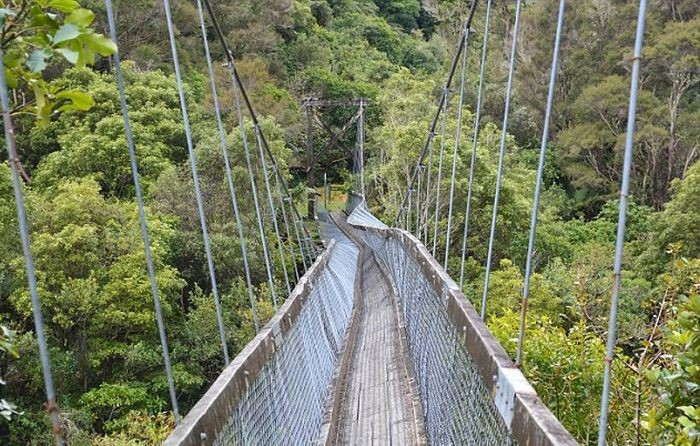 Туристы в Новой Зеландии упали в реку с подвесного моста (3 фото + видео)