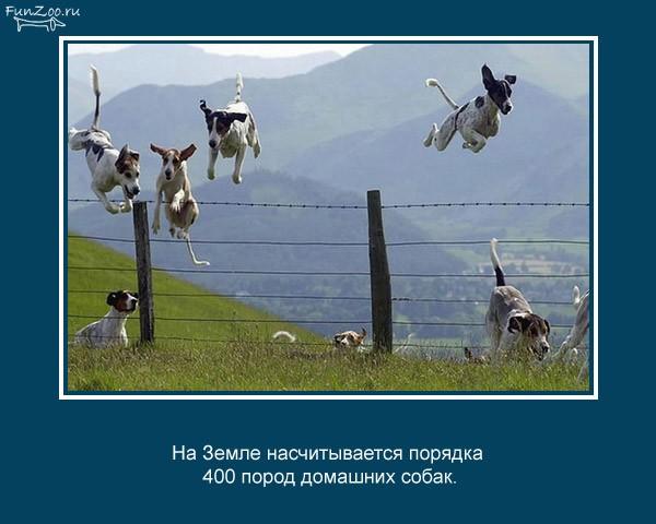 Познавательные факты о животных (25 фото)
