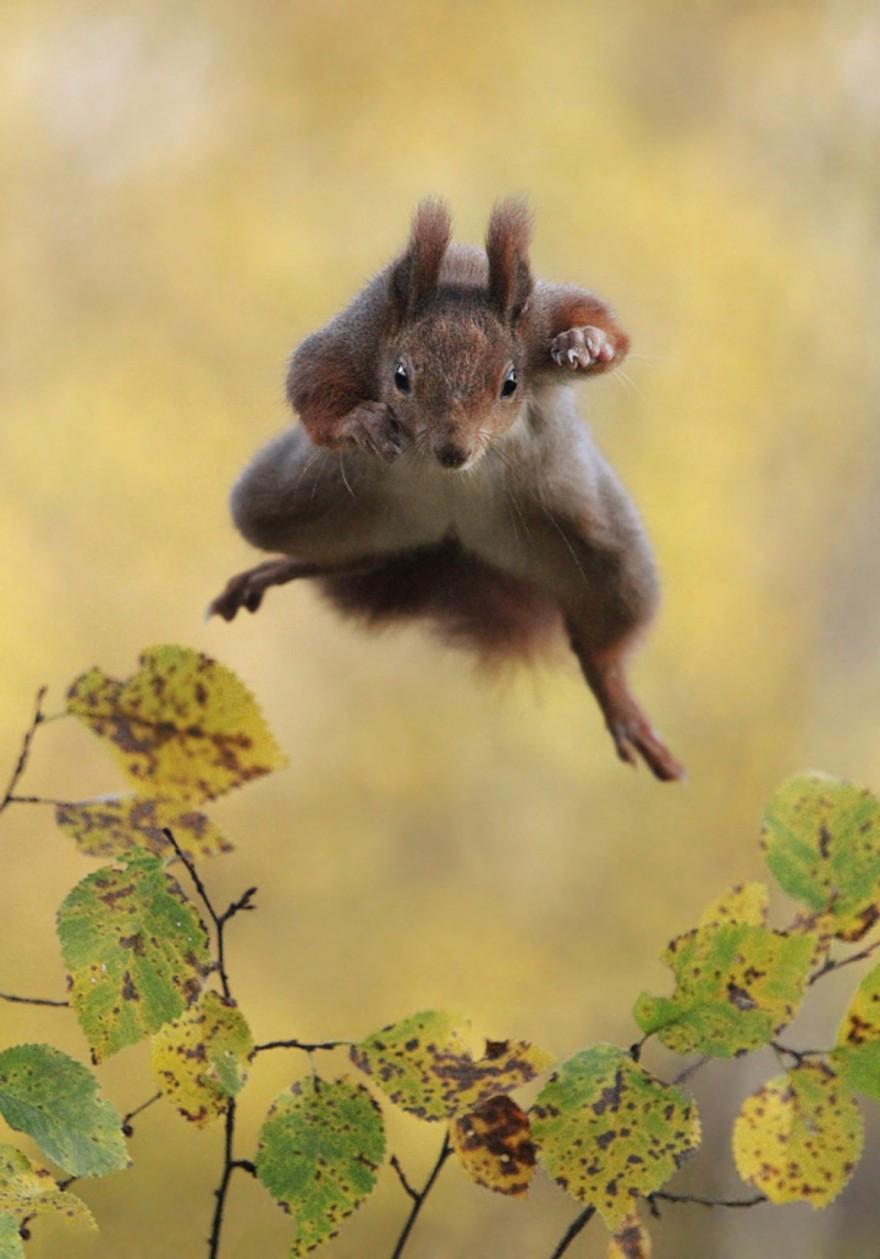 Конкурс фотографий самых смешных животных (27 фото)