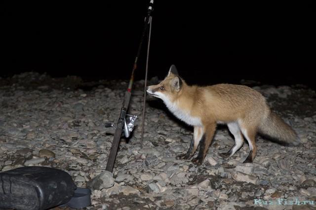 Неожиданная гостья на рыбалке