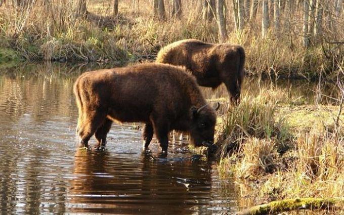 Весь мир шокирован тем, что же ученые обнаружили в чернобыльском лесу! (7 фото)
