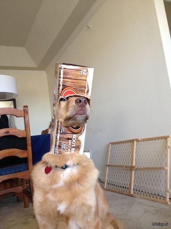 Забавные фото о неудачах собак (26 фото)