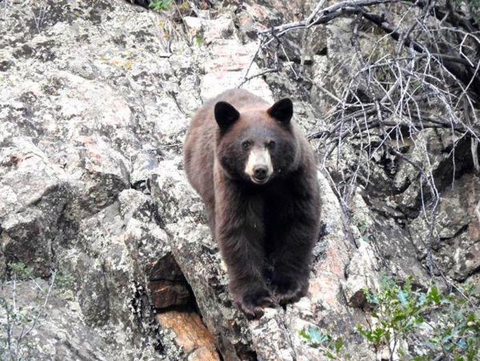 Туристам запретили посещение каньона в Денвере из-за попыток сделать селфи с медведем (9 фото)