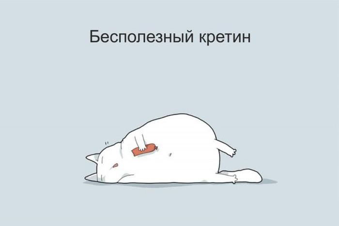 Типы котов в веселых рисунках (12 картинок)