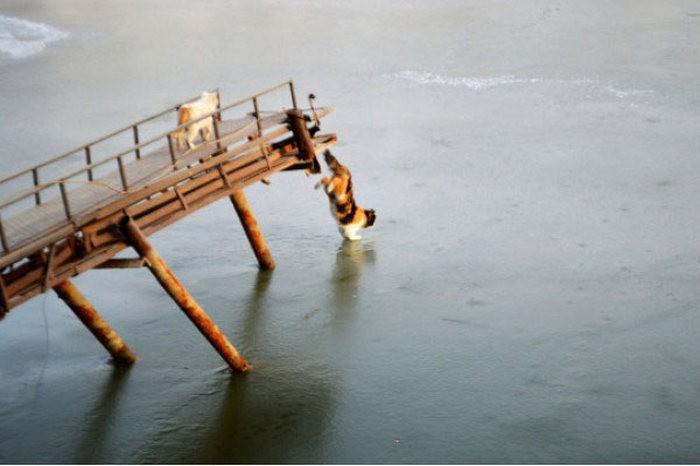 Коты в замешательстве, лед помешал им добраться до рыбы (10 фото)