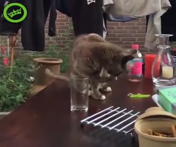 Шутка над котом