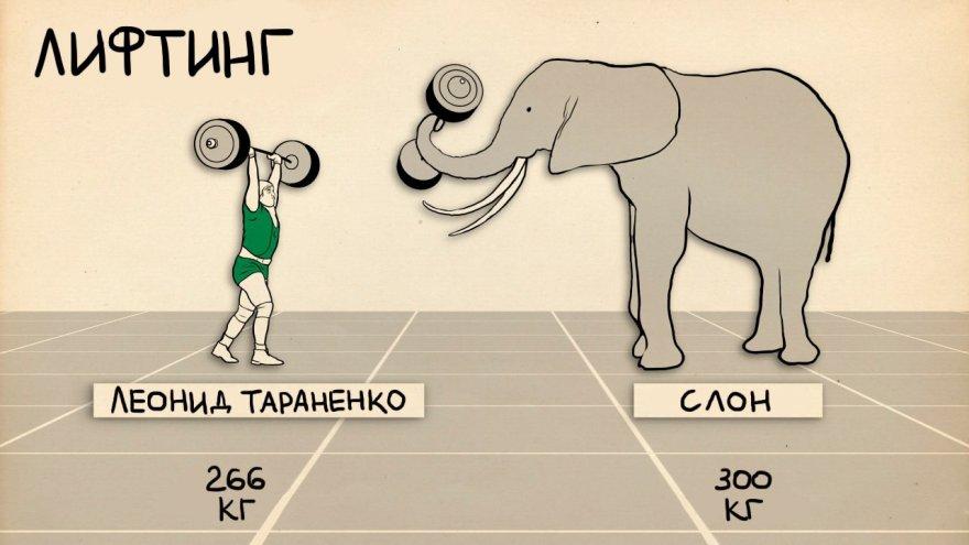 Cпортсмены против представителей животного мира (4 фото)