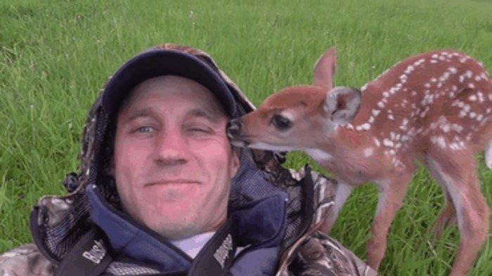 Cпасение одного олененка (9 фото + видео)