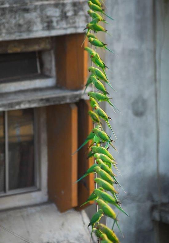 Столовая для 4000 попугаев (9 фото)