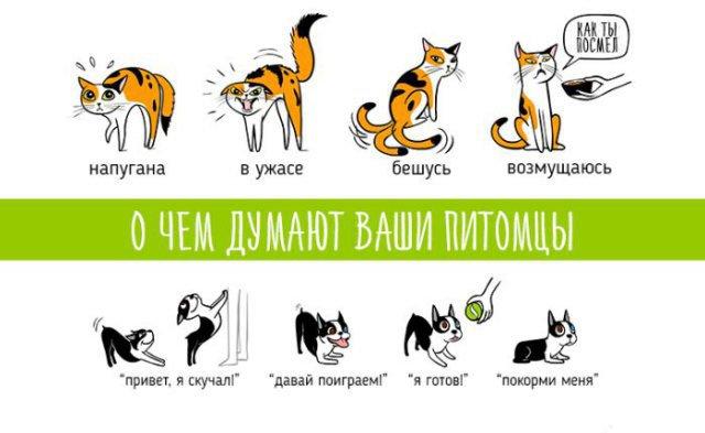 Настроение домашних животных в картинках (3 фото)