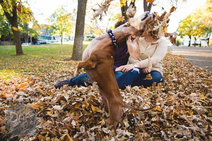 Фотосессию пары испортила игривая такса