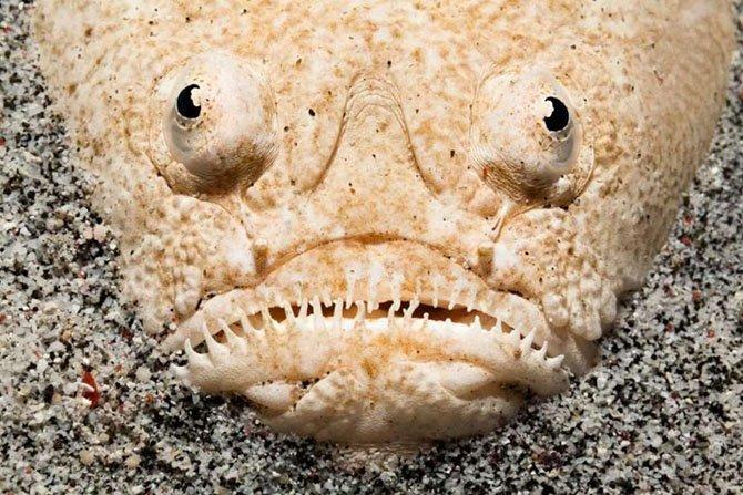 Морские «чудовища»