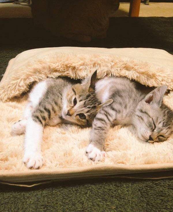 Хозяйская грелка для ног теперь греет котов (5 фото)