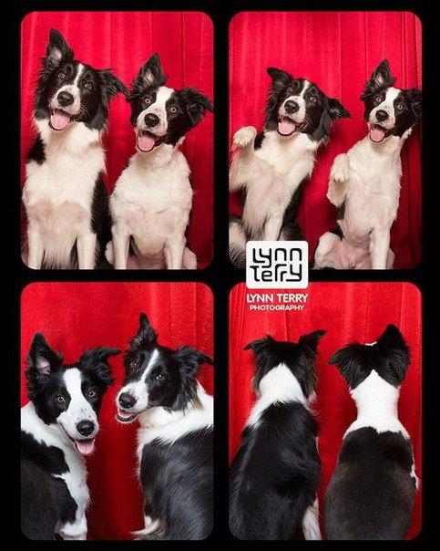 Серия забавных фотографий собак в фотобудке