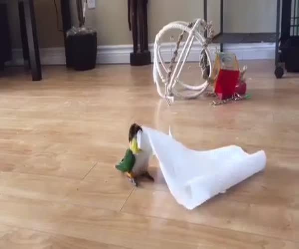 Забавный попугай нашел себе игрушку