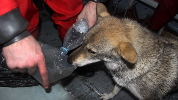 Спасение охотника и его собаки, которых унесло в открытое море (3 фото)