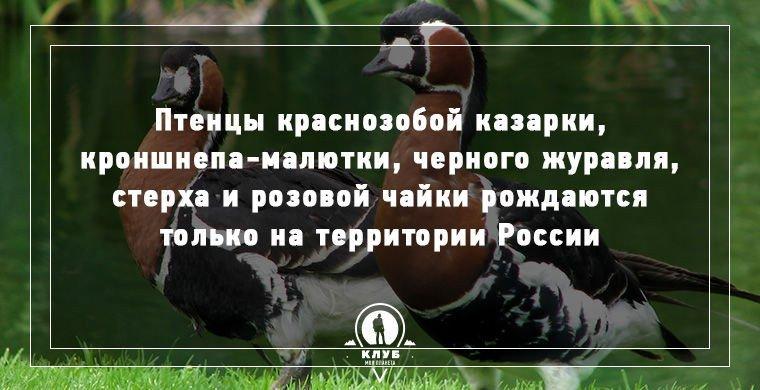 10 интересных фактов о животных и птицах (10 фото)