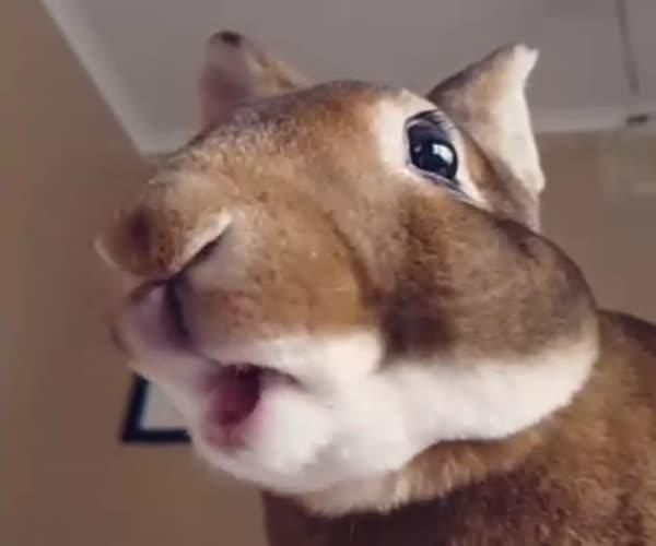 Жующий кролик