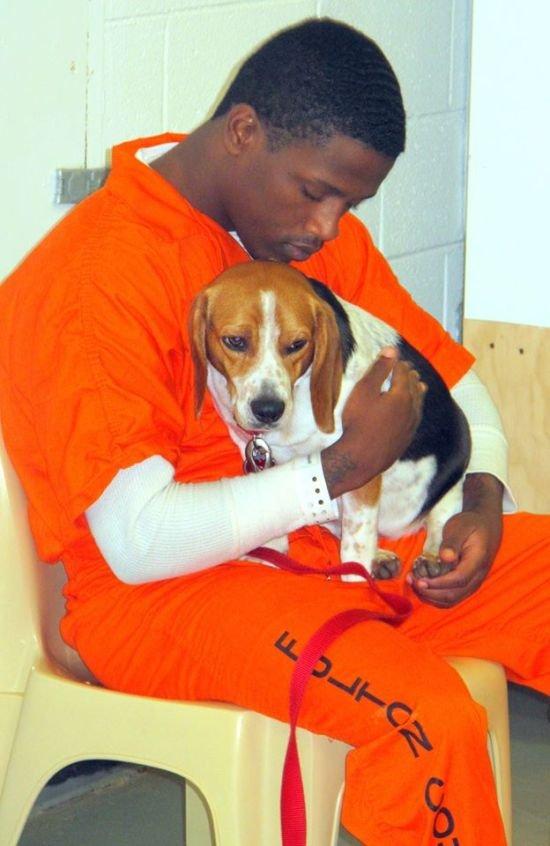 Заключенным разрешили брать на воспитание бездомных собак в одной из тюрем США (7 фото)