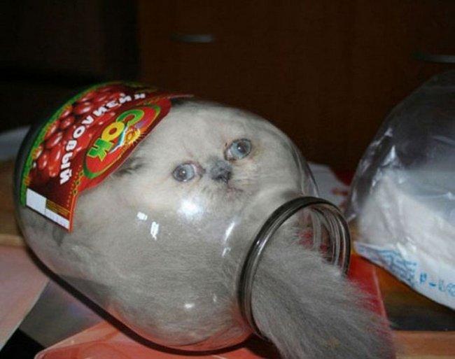 Коты — это жидкость