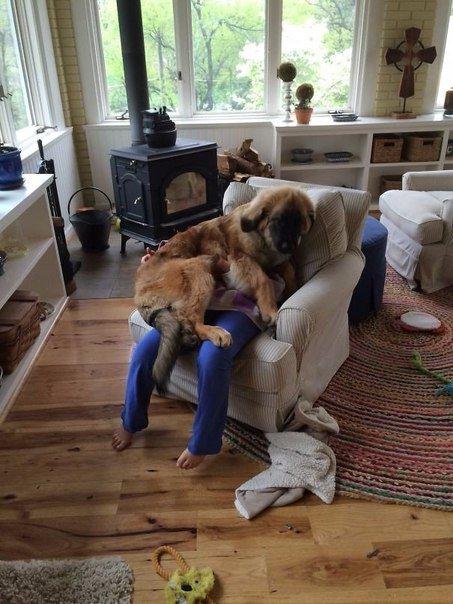 Забавные фотографии с собаками (10 фото)