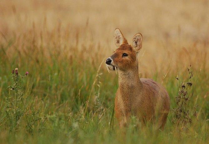 Животные, о которых мы и не слышали