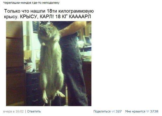 Забавные комментарии и высказывания из социальных сетей (35 фото)
