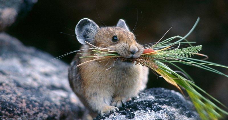 Будущее человечества на примере мышей