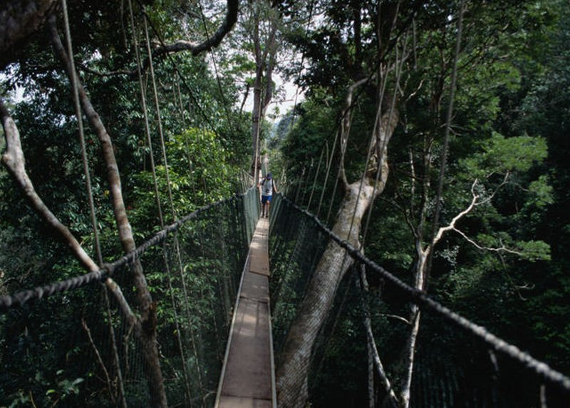 Головокружительные подвесные мосты