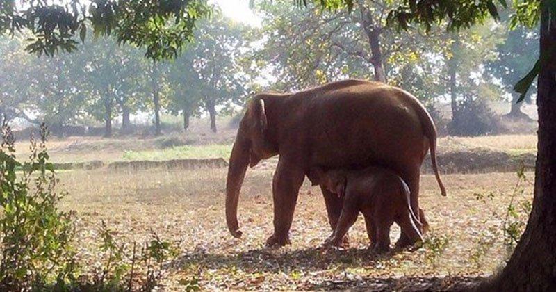 Нелегкая это работа, из болота тащить слоненка