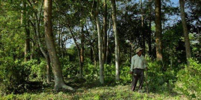 Индус высадил лес, который позже превратился в заповедник (7 фото)